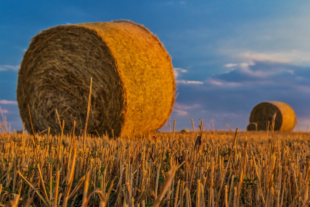 Just as in farming, there's a time to harvest when value investing.