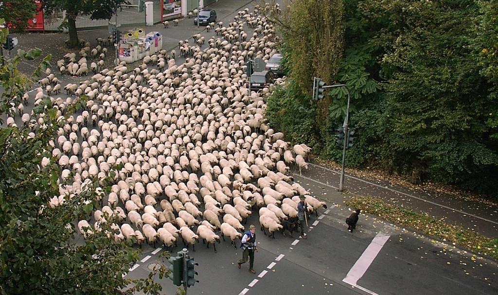 Sheeple 2 Warren Buffett Articles